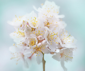 botanical, happy, and nature image