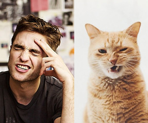 cat, robert pattinson, and funny image