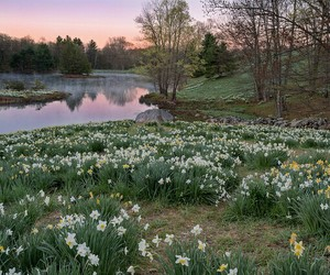 flowers, nature, and lake image