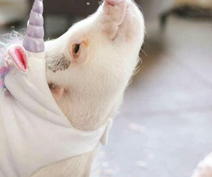 pig and unicorn image