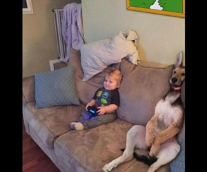 animals, tv, and cute image