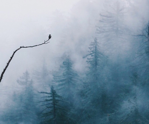 background, beauty, and fog image