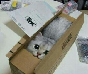 cat in a box, ups cat, and special pussy delivery image