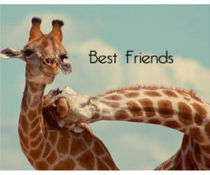 love, best friends, and giraffe image
