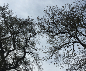 blue, branches, and tree image