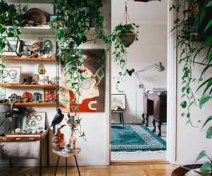 plants, room, and house image