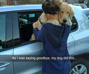 dog, love, and goodbye image