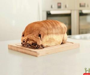 animal, chubby, and dog image
