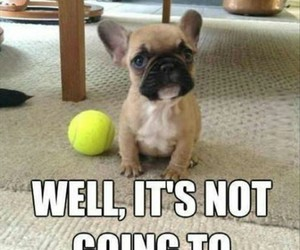 animals, funny, and ball image