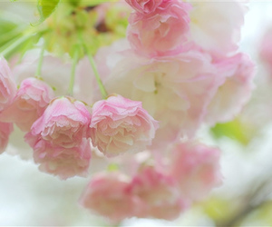 flowers, lovely, and photography image
