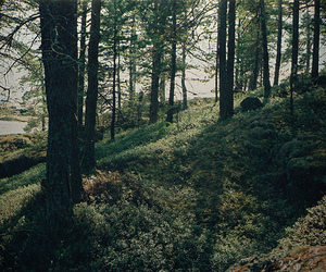 forrest, nature, and sunlight image