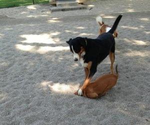 dog, animal, and fun image