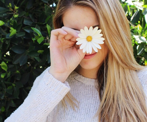 blonde, daisy, and hair image
