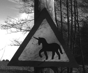unicorn and black and white image