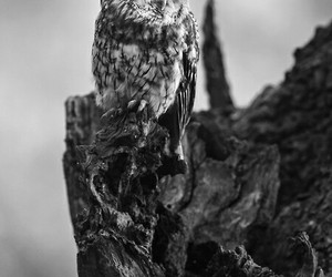 black, owl, and white image