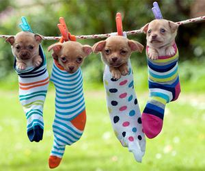 puppies, animals, and funny image