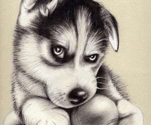 art, dog, and siberian husky image