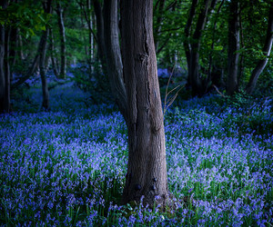 adventure, blue, and bluebells image