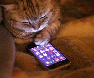 cat, cute, and iphone image
