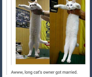 funny, long cat, and married image