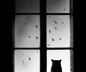 cat, bird, and window image