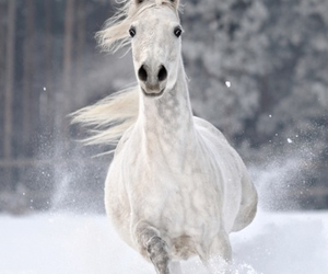 gallop, horse, and winter image