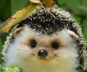 animals, hedgehog, and igel image