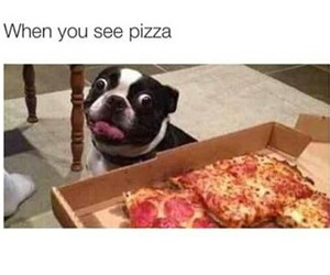 dog, funny, and pizza image