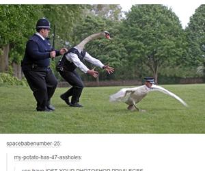 fun and tumblr image