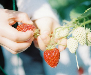 nature and strawberry image