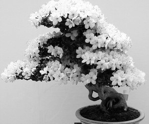 flowers and bonsai image