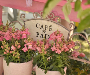 flowers, pink, and cafe image
