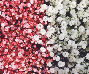 flowers, white, and red image