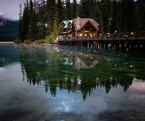 nature, forest, and canada image