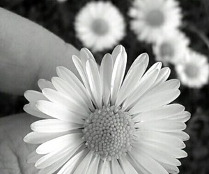 black, spring, and black and white image