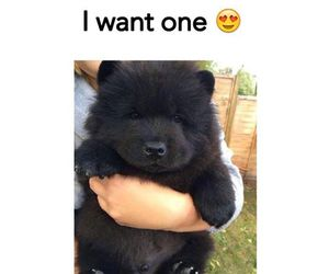 black, cute, and bear image