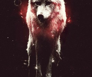 wolf, hipster, and wallpaper image