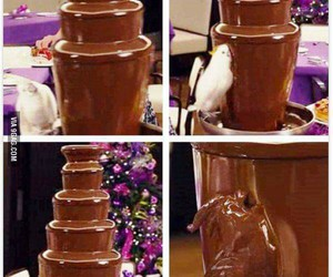 chocolate, funny, and parrot image