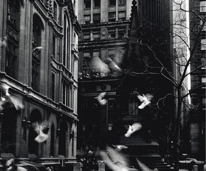 bird, black and white, and city image