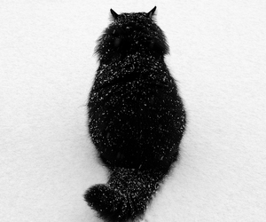 cat, snow, and black image