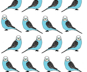 background, budgie, and budgies image