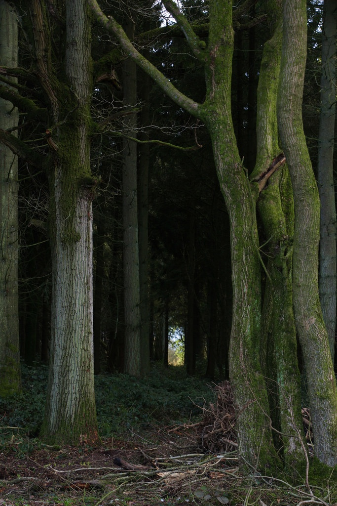 pathway, woods, and trees image