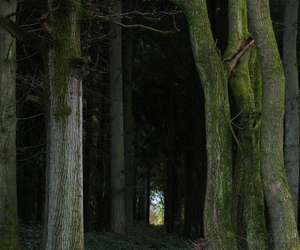 pathway, trees, and woods image