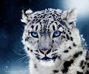 animal, snow, and tiger image