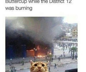 buttercup and katniss image