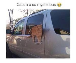 cat, funny, and car image