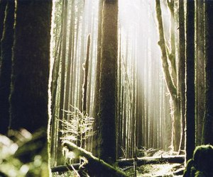alone, forest, and mist image