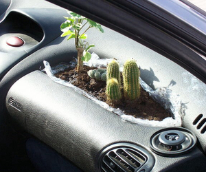 plants, cactus, and car image