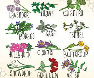 bees, nature, and save the bees image