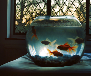 fish, vintage, and photography image